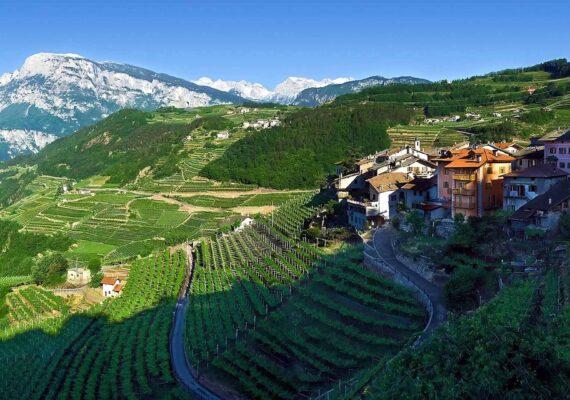 Винные туры с дегустацией: Трентино